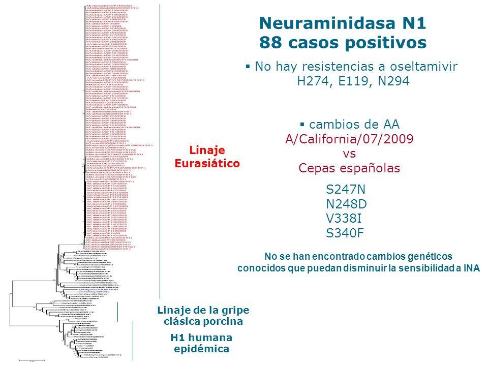No hay resistencias a oseltamivir H274, E119, N294 Neuraminidasa N1 88 casos positivos Linaje de la gripe clásica porcina H1 humana epidémica Linaje E