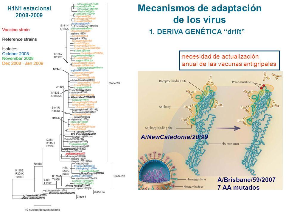 A/NewCaledonia/20/99 A/Brisbane/59/2007 7 AA mutados 1. DERIVA GENÉTICA drift necesidad de actualización anual de las vacunas antigripales Mecanismos