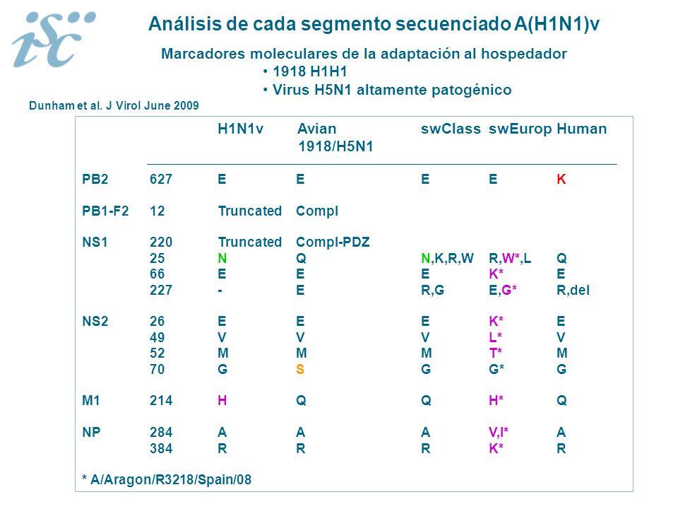Marcadores moleculares de la adaptación al hospedador 1918 H1H1 Virus H5N1 altamente patogénico H1N1v Avian swClassswEuropHuman 1918/H5N1 PB2627E EEEK