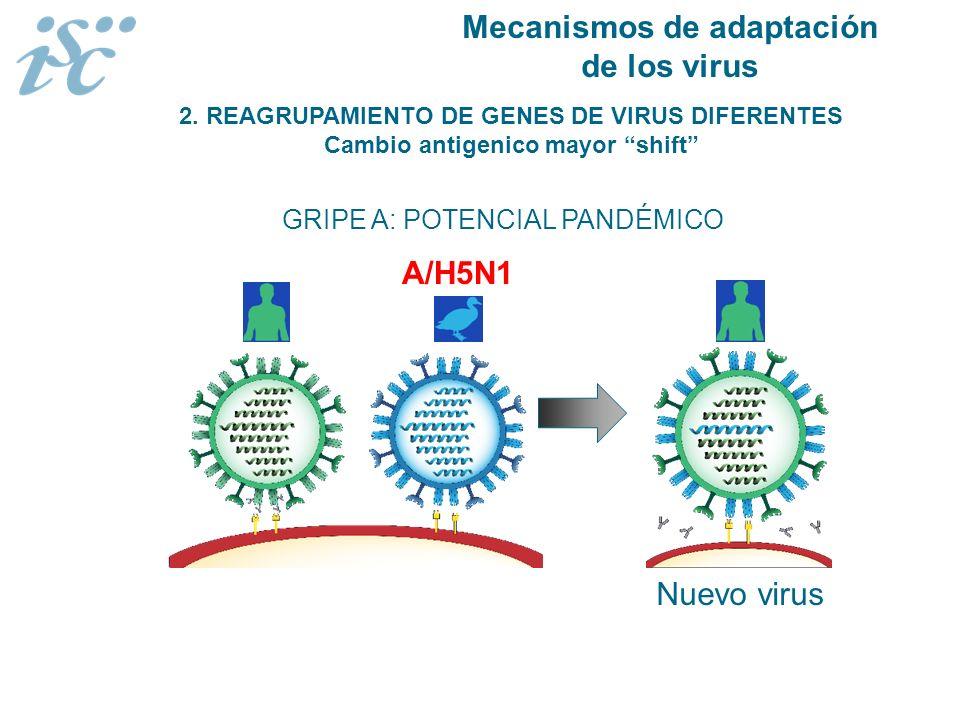 2. REAGRUPAMIENTO DE GENES DE VIRUS DIFERENTES Cambio antigenico mayor shift GRIPE A: POTENCIAL PANDÉMICO A/H5N1 Nuevo virus Mecanismos de adaptación