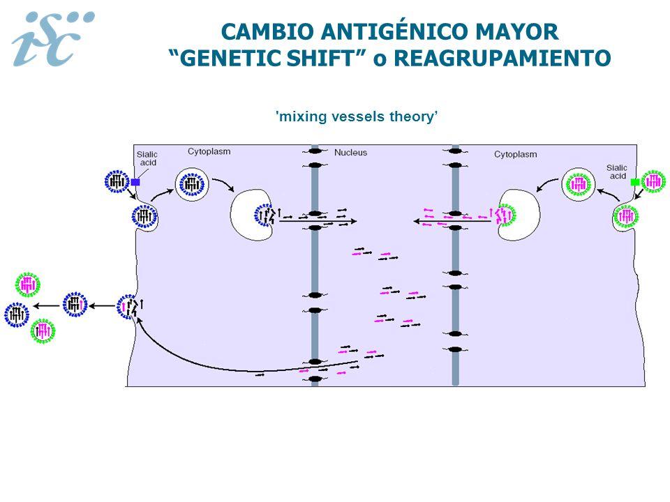 CAMBIO ANTIGÉNICO MAYOR GENETIC SHIFT o REAGRUPAMIENTO 'mixing vessels theory