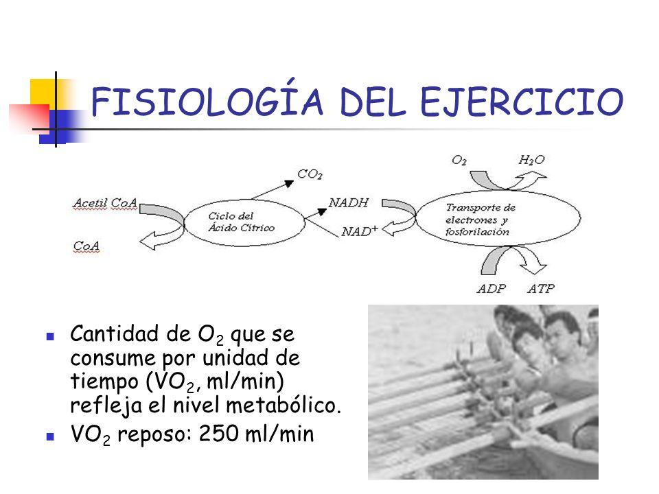 FISIOLOGÍA DEL EJERCICIO Cantidad de O 2 que se consume por unidad de tiempo (VO 2, ml/min) refleja el nivel metabólico. VO 2 reposo: 250 ml/min
