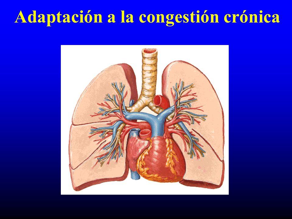 Intercambio gaseoso Gases sanguíneos –PaCO 2 –PaO 2 Fillmore SJ, et al. Am Heart J 1976;79:620