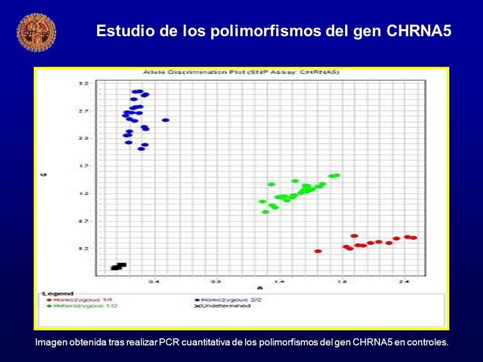 Estudio de los polimorfismos del gen CHRNA5 Imagen obtenida tras realizar PCR cuantitativa de los polimorfismos del gen CHRNA5 en controles.