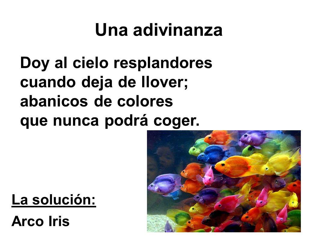 Una adivinanza La solución: Arco Iris Doy al cielo resplandores cuando deja de llover; abanicos de colores que nunca podrá coger.