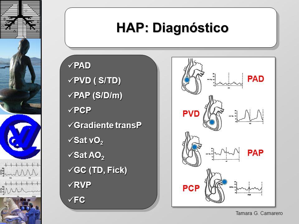 Tamara G. Camarero HAP: Diagnóstico HAP: Diagnóstico PAD PAD PVD ( S/TD) PVD ( S/TD) PAP (S/D/m) PAP (S/D/m) PCP PCP Gradiente transP Gradiente transP