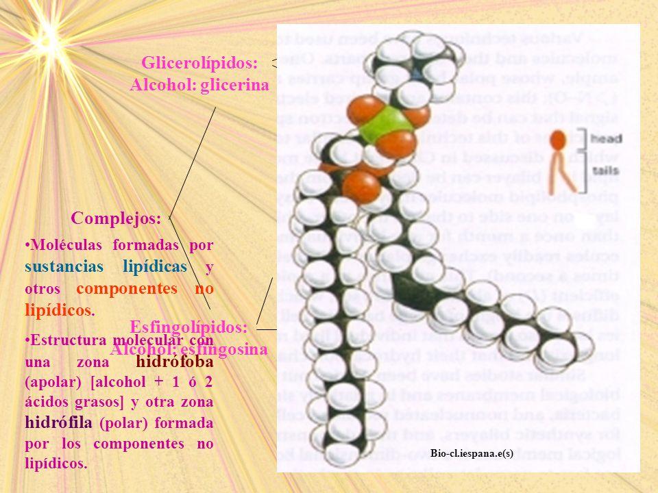 Gliceroglucolípidos: glicerina + dos ác. grasos + monosacarárido Glicerofosfolípidos: Ác. Fosfatídico: los dos OH primeros esterifican con ác. Grasos