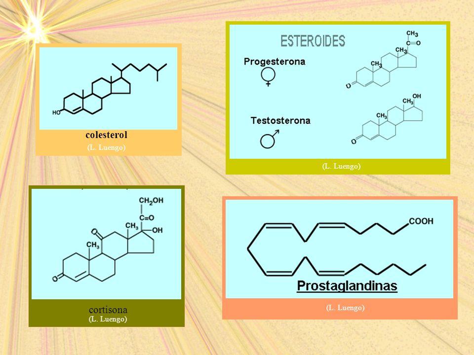 colesterol (L. Luengo) cortisona (L. Luengo)