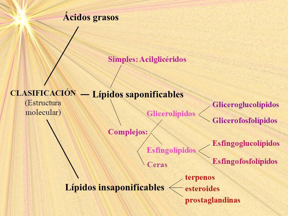 CLASIFICACIÓN (Estructura molecular) Ácidos grasos Lípidos saponificables Lípidos insaponificables Glicerolípidos Esfingolípidos Gliceroglucolípidos G