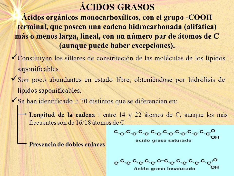ÁCIDOS GRASOS Ácidos orgánicos monocarboxílicos, con el grupo -COOH terminal, que poseen una cadena hidrocarbonada (alifática) más o menos larga, line
