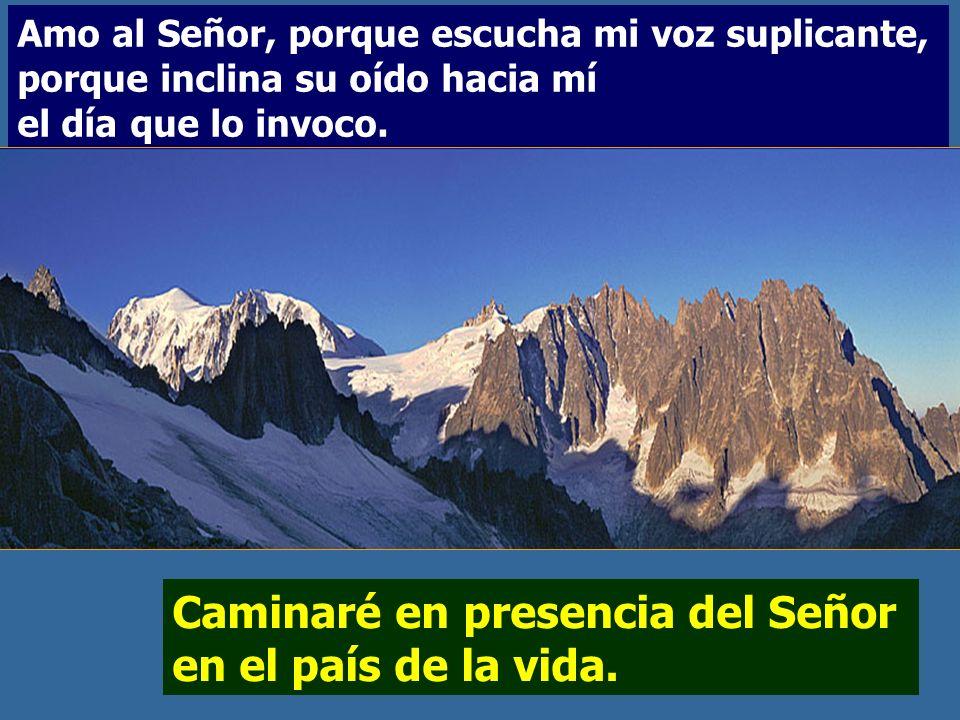 Caminaré en presencia del Señor en el país de la vida. Salmo 114