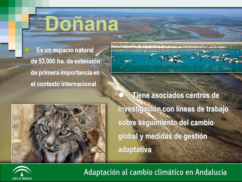 Doñana Es un espacio natural de 53.000 ha. de extensión de primera importancia en el contexto internacional Es un espacio natural de 53.000 ha. de ext