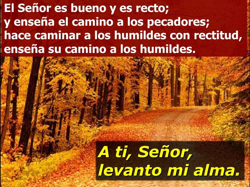 Señor, enséñame tus caminos, instrúyeme en tus sendas: haz que camine con lealtad; enséñame, porque tú eres mi Dios y Salvador. A ti, Señor, levanto m