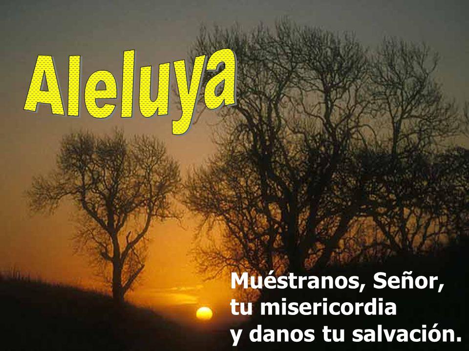 Las sendas del Señor son misericordia y lealtad para los que guardan su alianza y sus mandatos. El Señor se confía con sus fieles y les da a conocer s