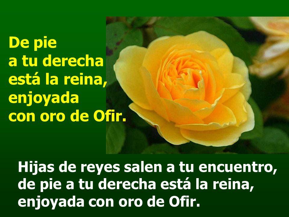 Salmo 44 De pie a tu derecha está la reina, enjoyada con oro de Ofir.