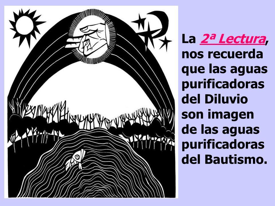 La 2ª Lectura, nos recuerda que las aguas purificadoras del Diluvio son imagen de las aguas purificadoras del Bautismo.