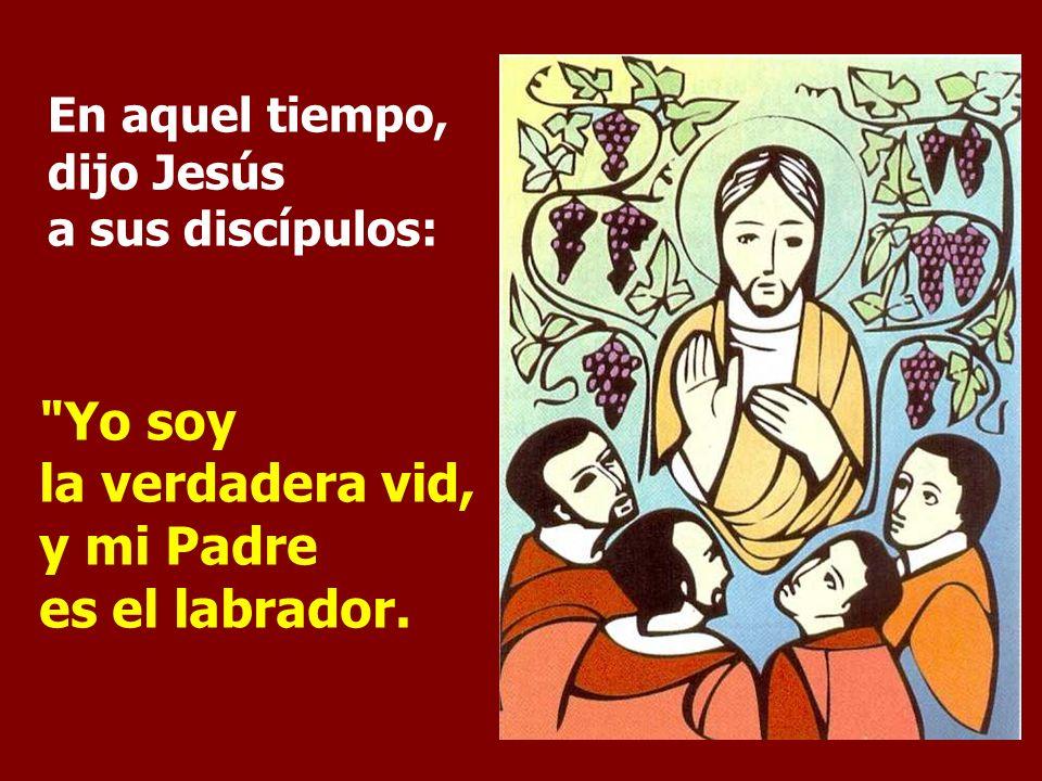 En aquel tiempo, dijo Jesús a sus discípulos: Yo soy la verdadera vid, y mi Padre es el labrador.