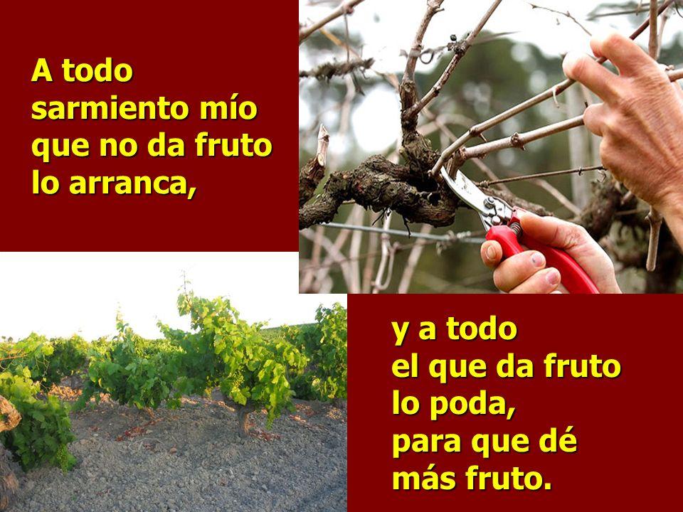 Permaneced en mí y yo en vosotros, dice el Señor, el que permanece en mí da fruto abundante.