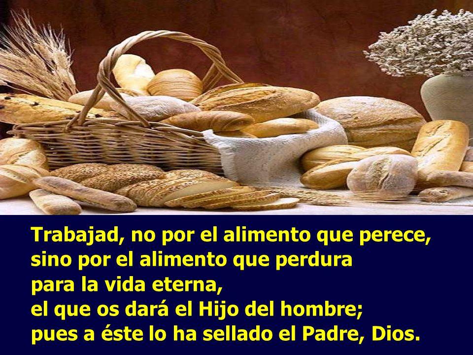 Trabajad, no por el alimento que perece, sino por el alimento que perdura para la vida eterna, el que os dará el Hijo del hombre; pues a éste lo ha sellado el Padre, Dios.