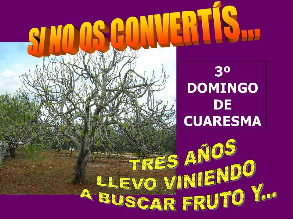 La Liturgia de este 3 er domingo de Cuaresma es una fuerte LLAMADA A LA CONVERSIÓN, a dar frutos.
