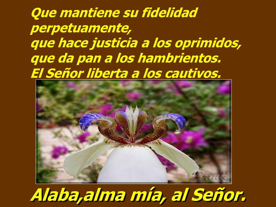 Salmo 145 Alaba,alma mía, al Señor.