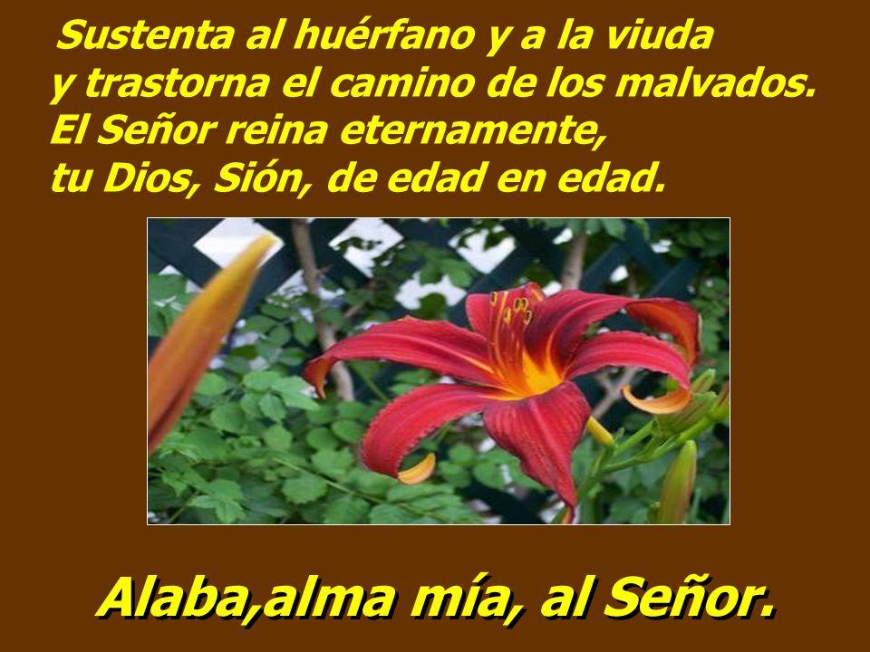 El Señor abre los ojos al ciego, el Señor endereza a los que ya se doblan, el Señor ama a los justos, el Señor guarda a los peregrinos. Alaba,alma mía