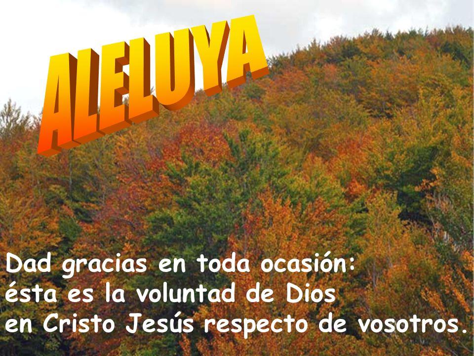 Los confines de la tierra han contemplado la victoria de nuestro Dios. Aclamad al Señor, tierra entera; gritad, vitoread, tocad. El Señor revela a las