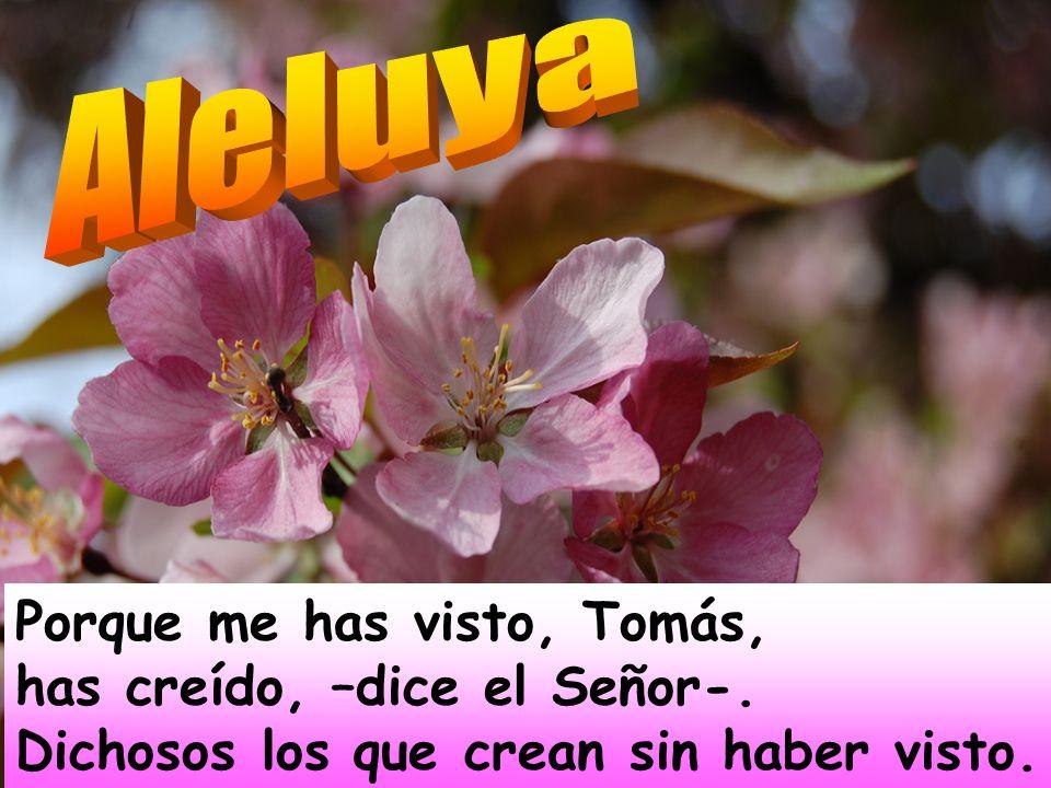 Señor, danos la salvación; Señor danos prosperidad. Bendito el que viene en nombre del Señor, os bendecimos desde la casa del Señor; El Señor es Dios,