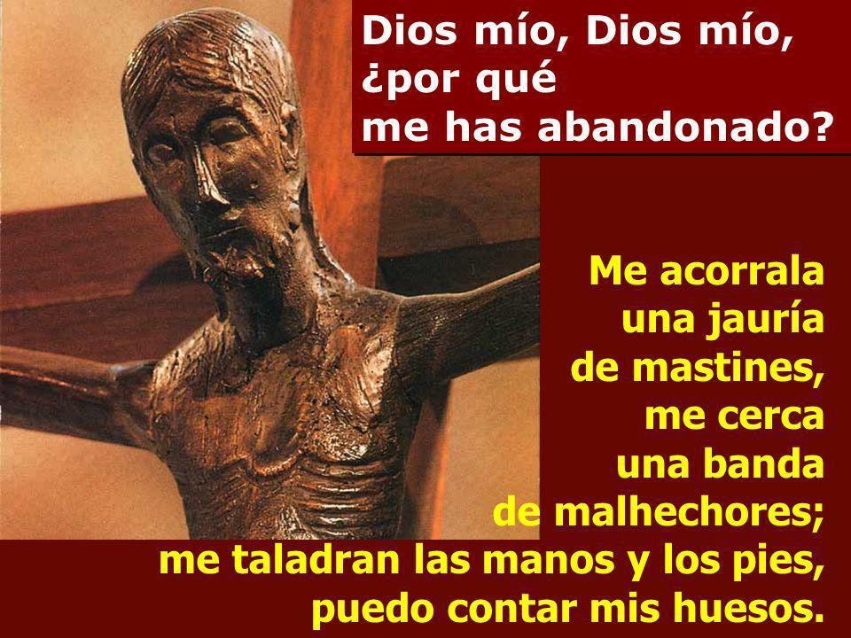 Al verme, se burlan de mí, hacen visajes, menean la cabeza: Acudió al Señor, que le ponga a salvo; que lo libre, si tanto lo quiere. Dios mío, Dios mí