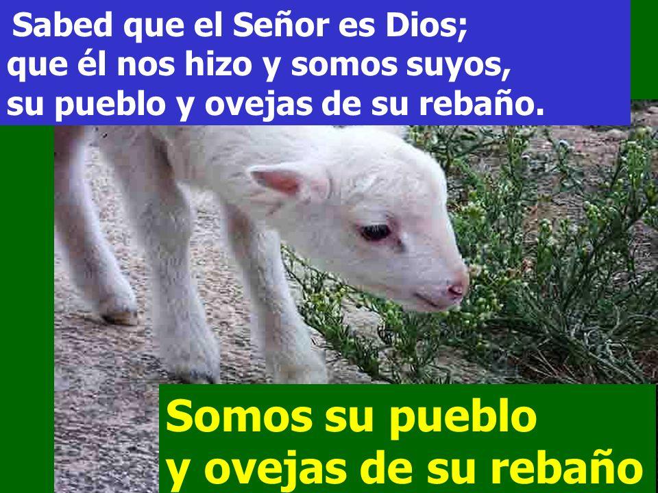 Aclama al Señor, tierra entera, servid al Señor con alegría, entrad en su presencia con vítores. Somos su pueblo y ovejas de su rebaño Somos su pueblo