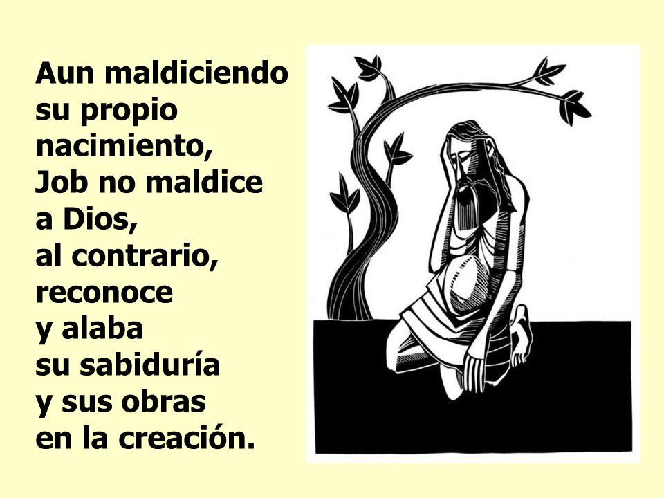 Aun maldiciendo su propio nacimiento, Job no maldice a Dios, al contrario, reconoce y alaba su sabiduría y sus obras en la creación.