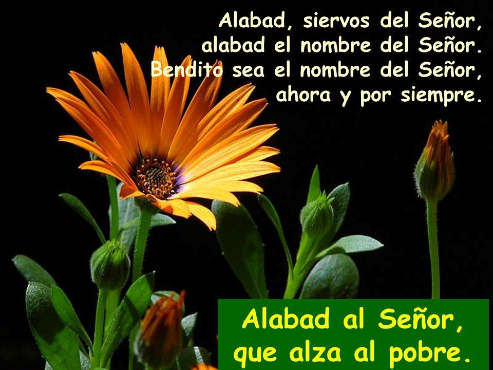 Alabad al Señor, que alza al pobre. 112 Salmo 112