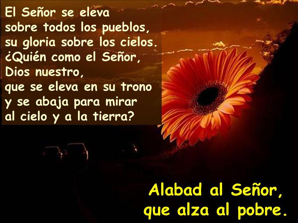 Alabad, siervos del Señor, alabad el nombre del Señor. Bendito sea el nombre del Señor, ahora y por siempre. Alabad al Señor, que alza al pobre.