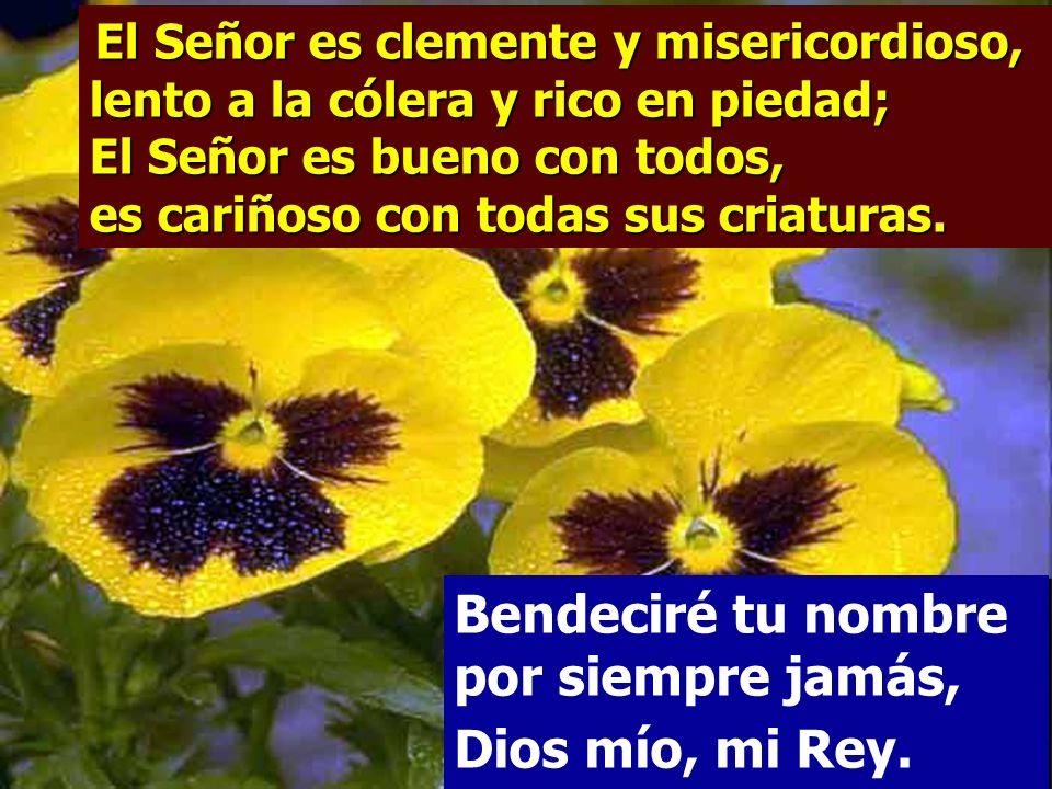Salmo 144 Bendeciré tu nombre por siempre jamás, Dios mío, mi Rey.