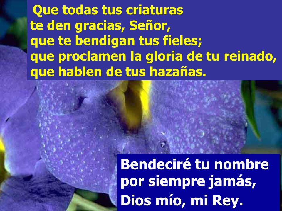 El Señor es clemente y misericordioso, lento a la cólera y rico en piedad; El Señor es clemente y misericordioso, lento a la cólera y rico en piedad;