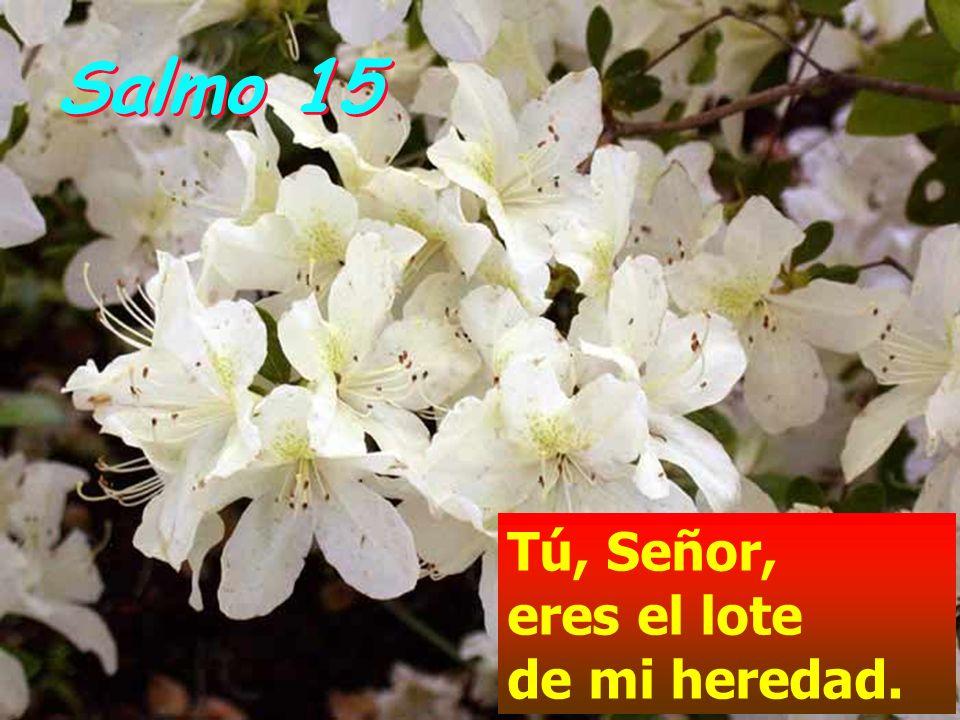 Jesús le contestó: El que echa mano al arado y sigue mirando atrás no vale para el Reino de Dios. Otro le dijo: Te seguiré, Señor. Pero déjame primero