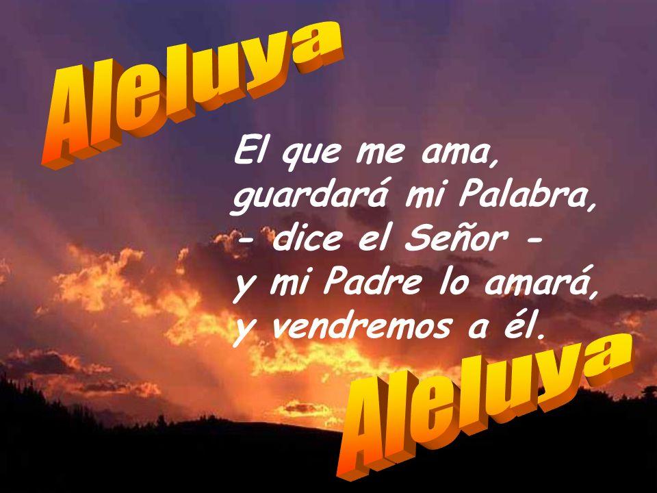 Viva el Señor, bendita sea mi Roca, sea ensalzado mi Dios y Salvador. Tú diste gran victoria a tu rey, tuviste misericordia de tu Ungido. Yo te amo, S