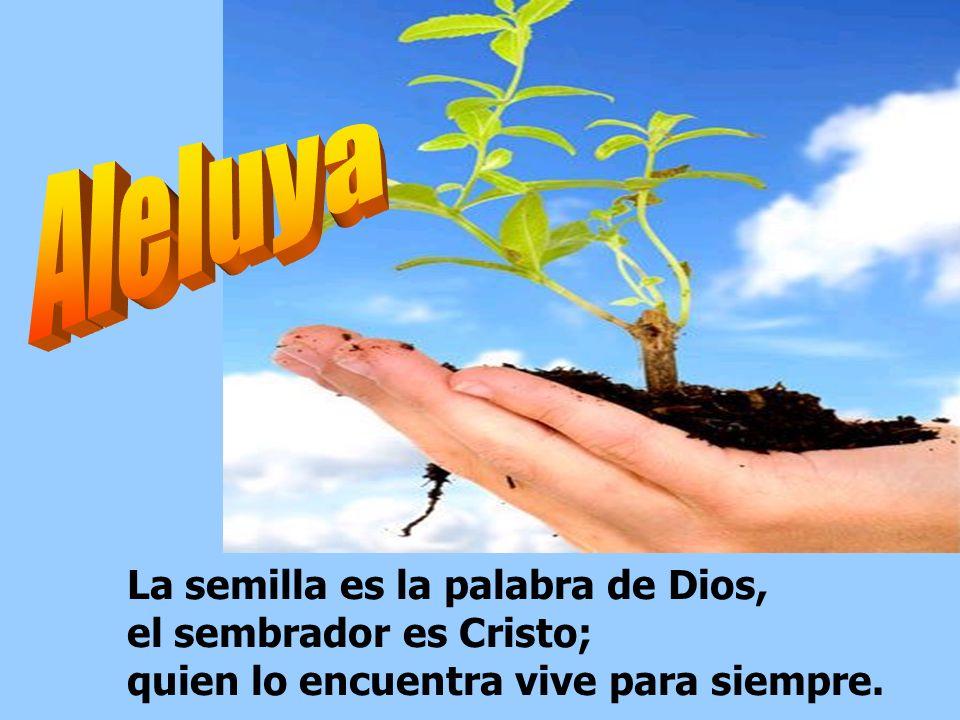 En la vejez seguirá dando fruto y estará lozano y frondoso, para proclamar que el Señor es justo, que en mi Roca no existe la maldad. Es bueno darte g