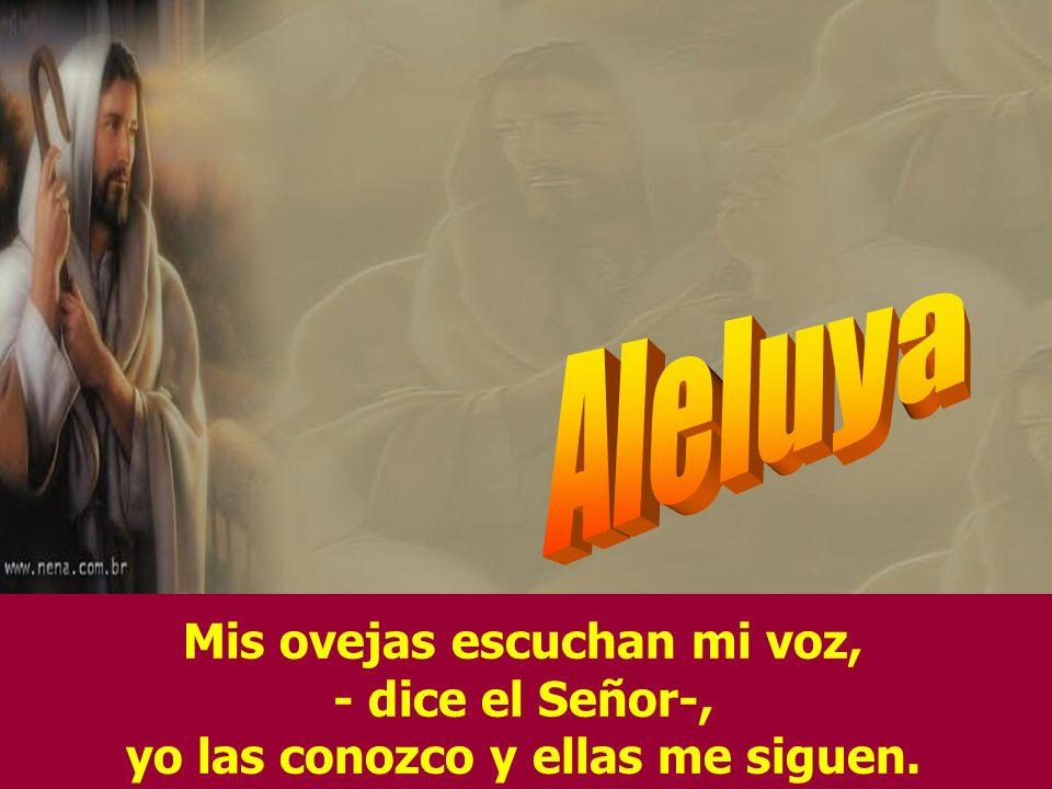 Tu bondad y tu misericordia me acompañan, todos los días de mi vida, y habitaré en la casa del Señor por años sin término.