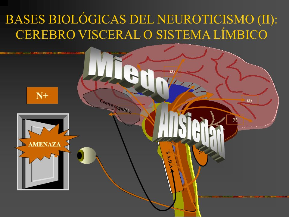Neuroticismo: ¿Qué resulta.Alto en N= Neurótico: SNA lábil o inestable.