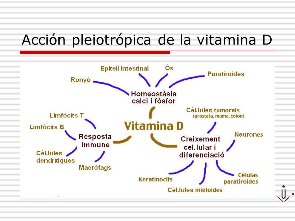 Vitamin D biosynthesis