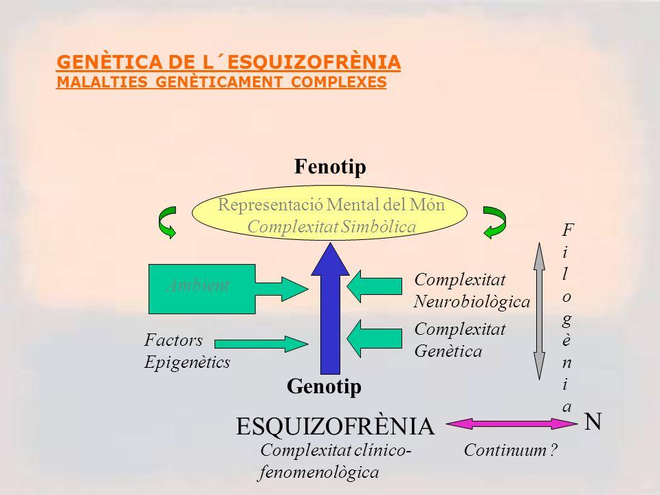 GENÈTICA DE L´ESQUIZOFRÈNIA MALALTIES GENÈTICAMENT COMPLEXES ESQUIZOFRÈNIA Genotip Fenotip Factors Epigenètics Ambient Complexitat Genètica Complexitat Neurobiològica FilogèniaFilogènia Representació Mental del Món Complexitat Simbòlica N Continuum .
