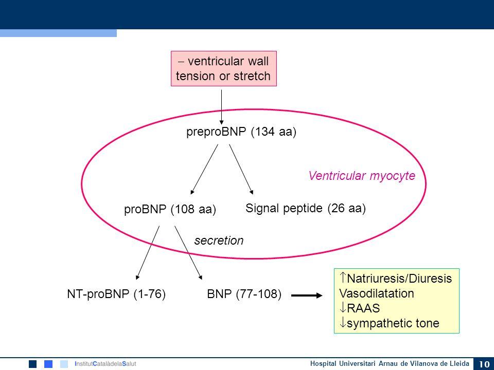 Hospital Universitari Arnau de Vilanova de Lleida 10 preproBNP (134 aa) proBNP (108 aa) Signal peptide (26 aa) NT-proBNP (1-76)BNP (77-108) Ventricula