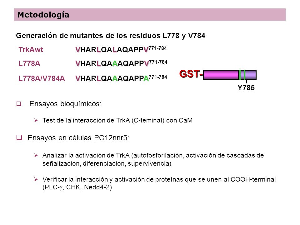 Generación de mutantes de los residuos L778 y V784 VLLV VHARLQALAQAPPV 771-784 VLAV VHARLQAAAQAPPV 771-784 VLAA VHARLQAAAQAPPA 771-784 TrkAwt L778A L7