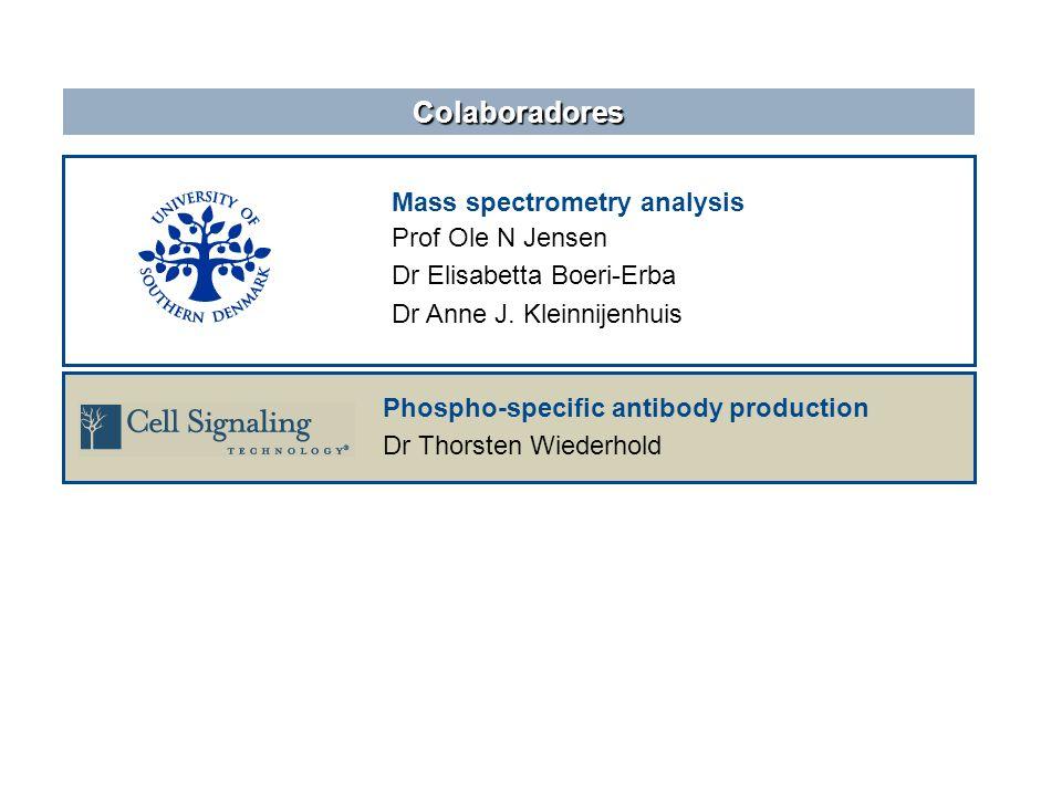 Mass spectrometry analysis Prof Ole N Jensen Dr Elisabetta Boeri-Erba Dr Anne J. Kleinnijenhuis Colaboradores Phospho-specific antibody production Dr