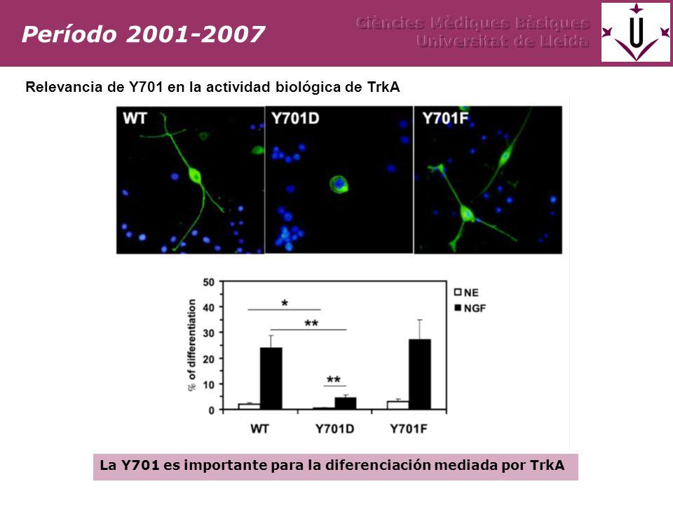 Caracterización de la actividad de los mutantes de la Y701 Efecto de la mutación en la activación de vías Actividad in vitro del receptor Período 2001-2007 Y701 es importante para la actividad del receptor Trk inducida por NGF