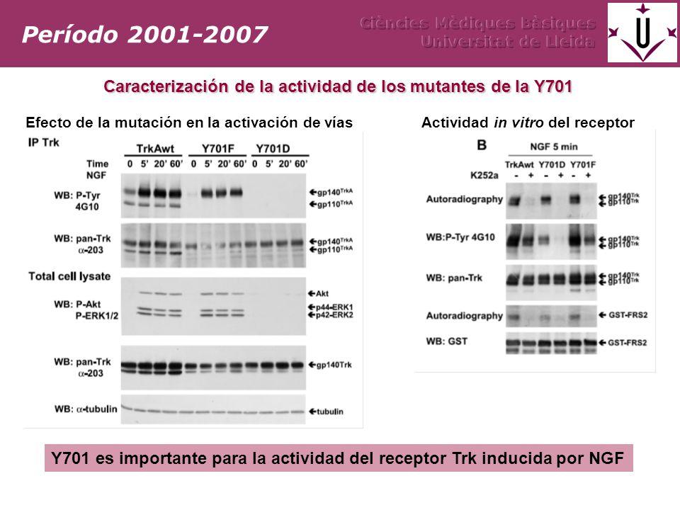 Caracterización de la actividad de los mutantes de la Y701 Efecto de la mutación en la activación de vías Actividad in vitro del receptor Período 2001