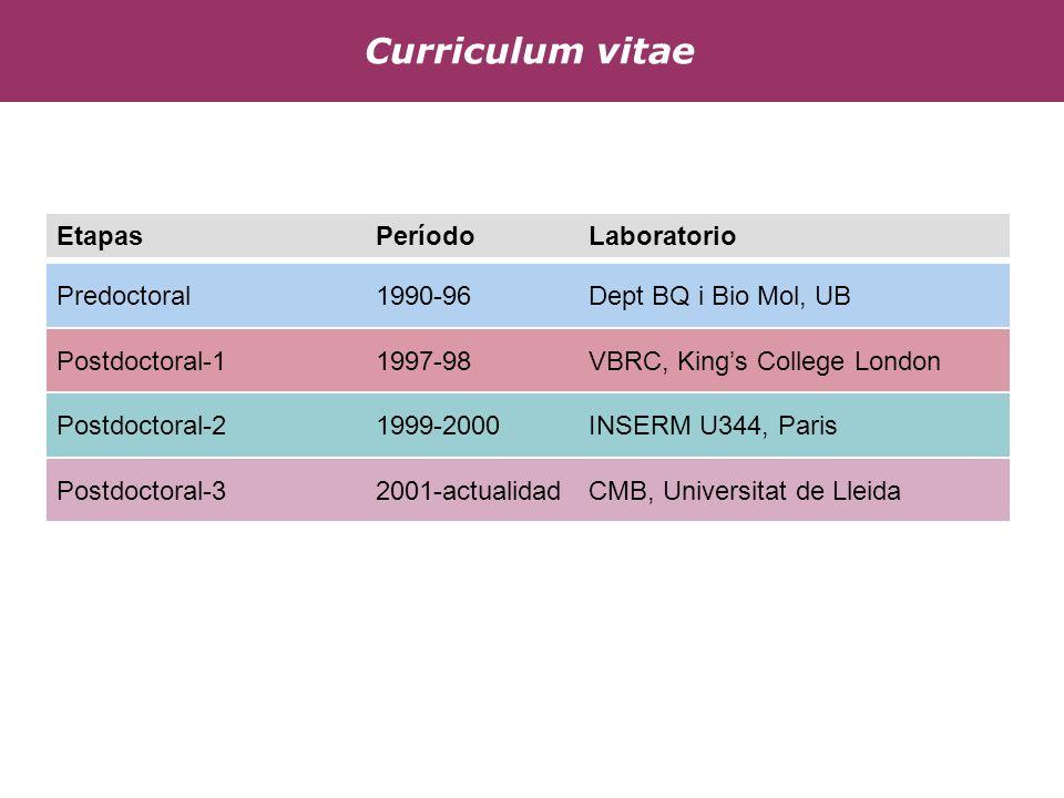 Postdoctoral-21999-2000INSERM U344, Paris Predoctoral1990-96 Dept BQ i Bio Mol, UB Postdoctoral-11997-98VBRC, Kings College London Postdoctoral-32001-actualidadCMB, Universitat de Lleida Etapas PeríodoLaboratorio Curriculum vitae