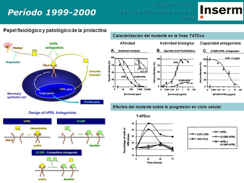 Período 1999-2000Conclusiones: 1.El mutante G129R antagoniza los efectos de la prolactina en las líneas celulares de cáncer de mama: Proliferación celular Activación de los factores de transcripción STAT5b 2.Será necesario incrementar su afinidad por el receptor para que sea un antagonista útil para el tratamiento del cáncer de mama.Conclusiones: 1.El mutante G129R antagoniza los efectos de la prolactina en las líneas celulares de cáncer de mama: Proliferación celular Activación de los factores de transcripción STAT5b 2.Será necesario incrementar su afinidad por el receptor para que sea un antagonista útil para el tratamiento del cáncer de mama.