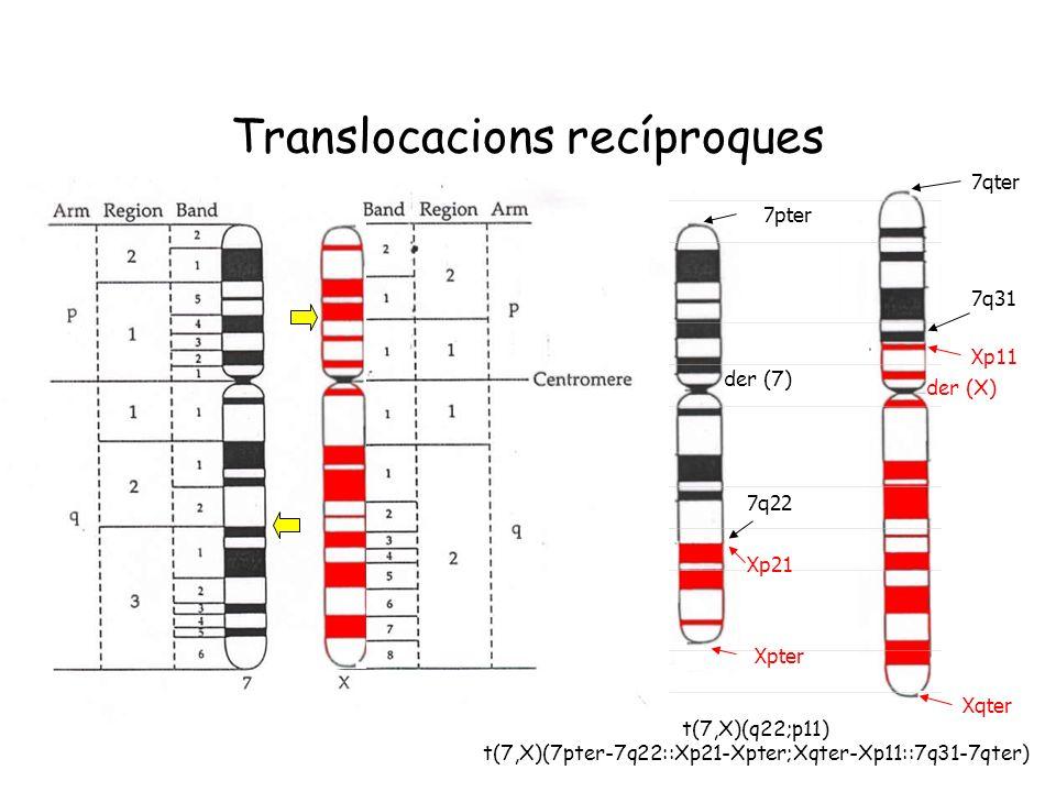 Translocacions recíproques der (7) der (X) t(7,X)(q22;p11) t(7,X)(7pter-7q22::Xp21-Xpter;Xqter-Xp11::7q31-7qter) 7pter 7q22 Xp21 Xpter Xqter Xp11 7q31
